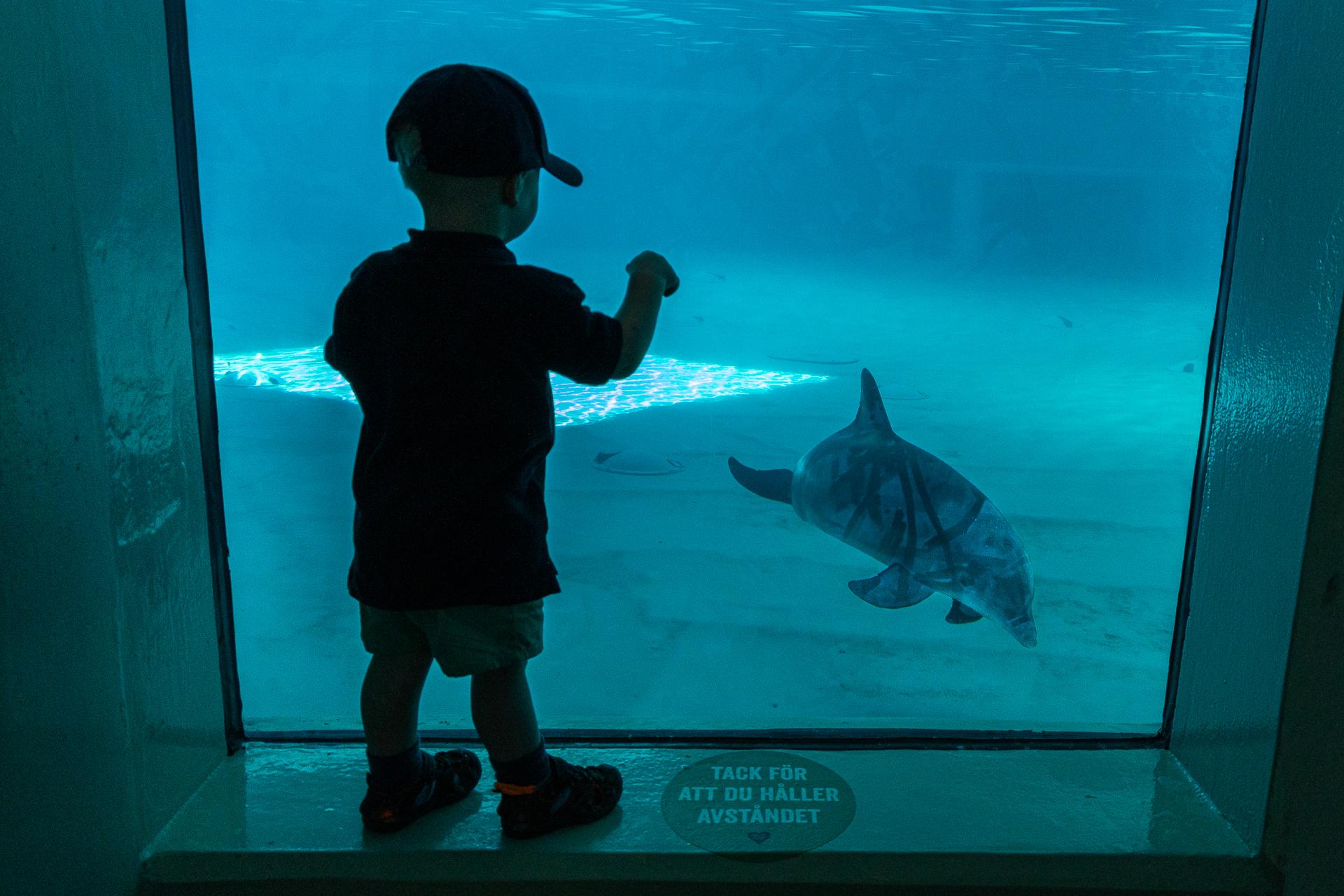 Stoppa delfinshowen!